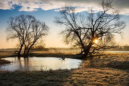 pond near two bare trees in the desert during golden hour