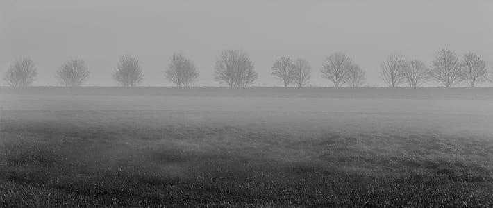 greyscale photo of trees