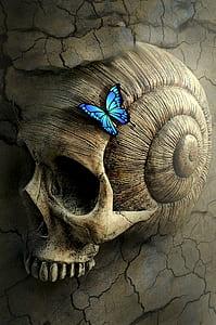 Ulysses butterfly on human seashell skull digital wallpaper