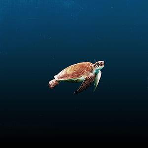 brown and green tortoise in ocean