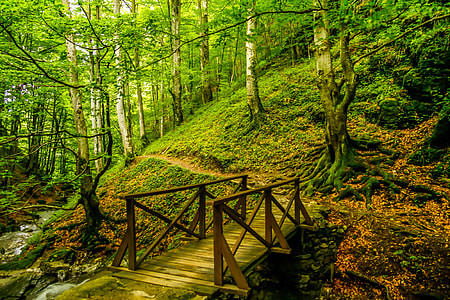 brown wooden bridge on forest