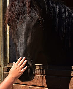person's hand holding horse nose