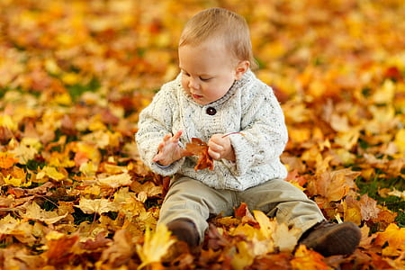baby on maple leave