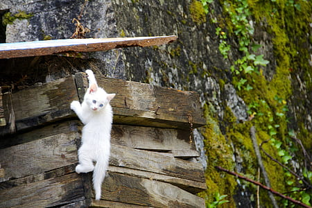 white short-furred cat climbing on brown wooden frame