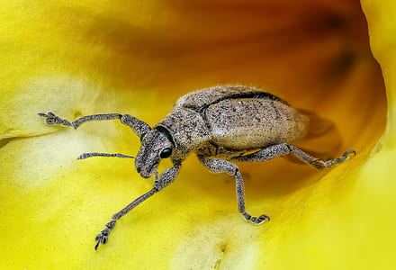 brown beetle on yellow flower in closeup photo