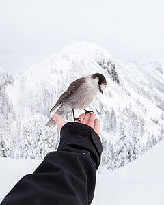 gray and brown bird on hand in snow terrain