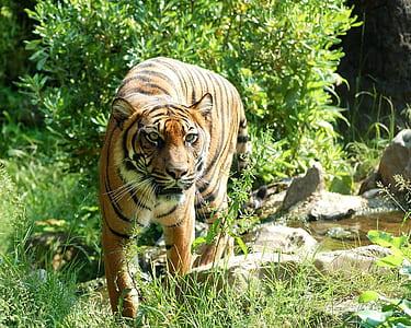 tiger near green leaf plant