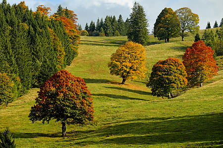 three red trees during daytime