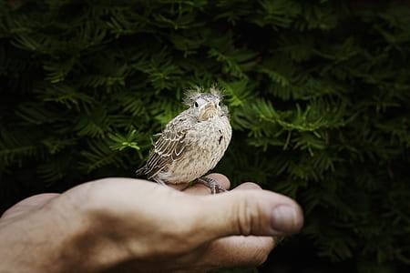 gray bird on human palm