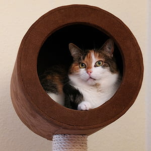 calico cat on cat condo