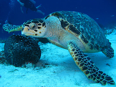 white and black turtle on body of water