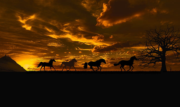silhouette photography of four horses under sunset
