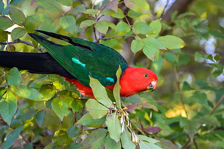 green and red parrot on brown tree branch