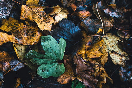 Assorted Color Leafs Photo