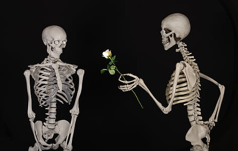 skeleton giving white rose to other skeleton