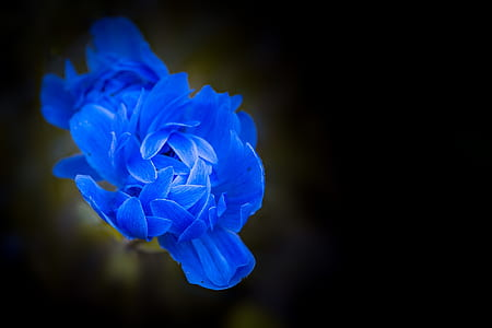 blue petaled flowers in bloom close up photo