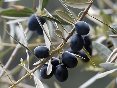 shallow focus photography of round black fruits