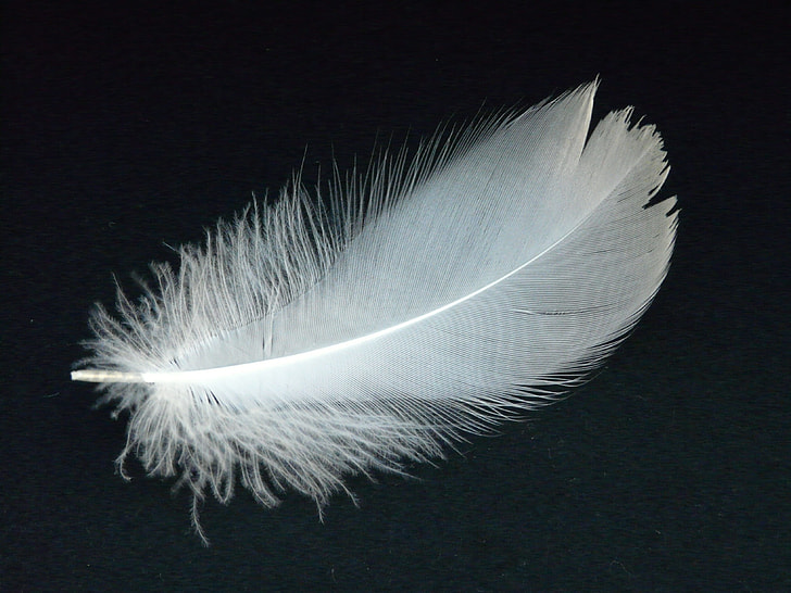 white feather on top of black surface