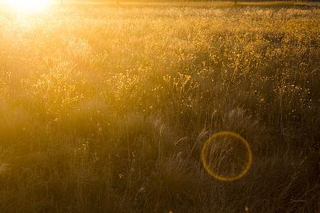 Grass Field Photo