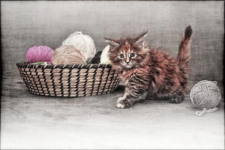orange and gray cat beside brown wicker basket