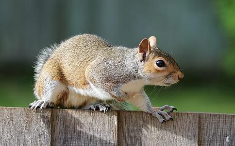 Brown Squirrel on Brown Garden Railings