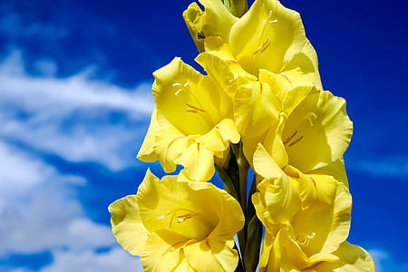 shallow focus photography of yellow flowers during daytime