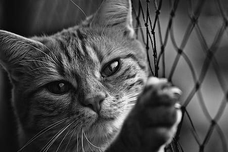 Cat holding on fence in grayscale photography