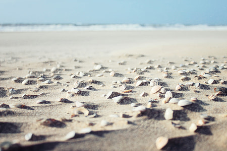 Sea shells sitting on the sandy beach