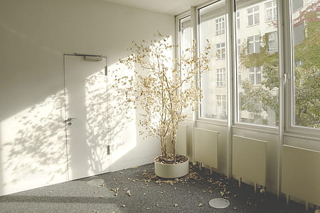 plant inside room during daytime