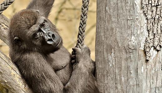 black monkey holding on rope