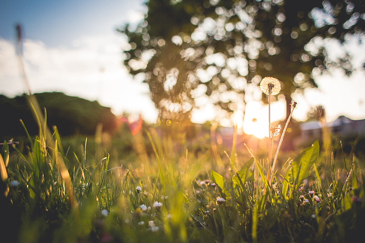 Just Another Grass Sunset