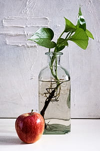 still life photography of red apple beside green leaf plant placed on clear glass vase