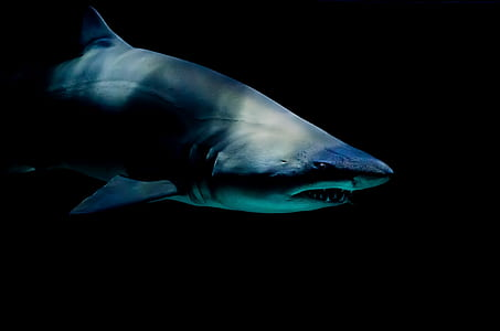 gray shark in closeup photo