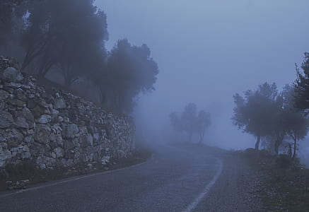 Road Between Trees and a Cliff Covered With Fog