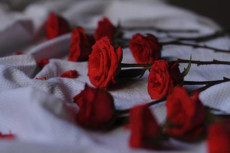 Closeup shot of red roses