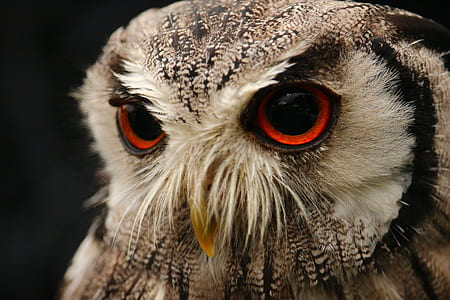 closeup photo of brown and white owl