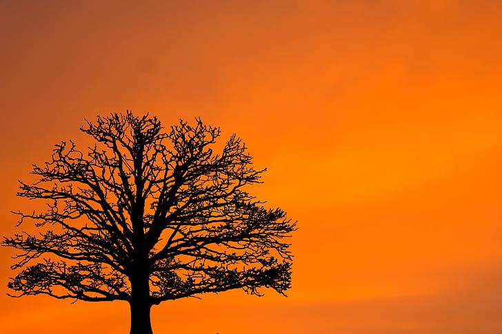 silhouette of tree under orange sky