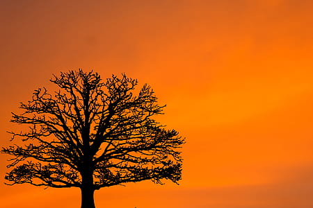 silhouette of tree under orange sky