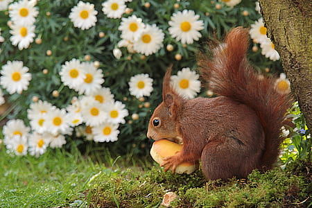 brown squirrel holding food near tree