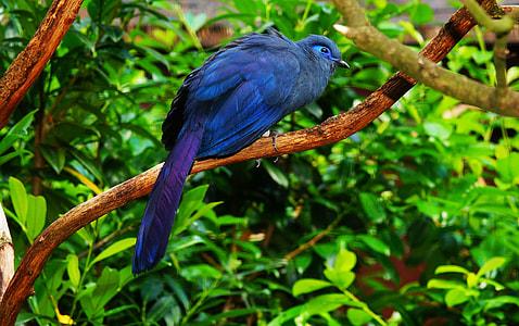blue bird perch on tree