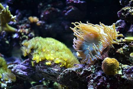 sea anemone under water