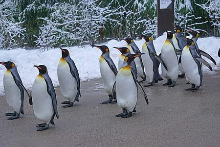 penguins on gray concrete surface