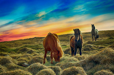 three horse stands on green grass field during sunset