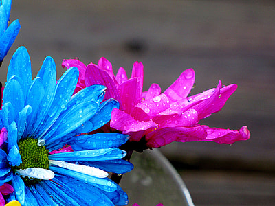 pink and blue flower with water dew