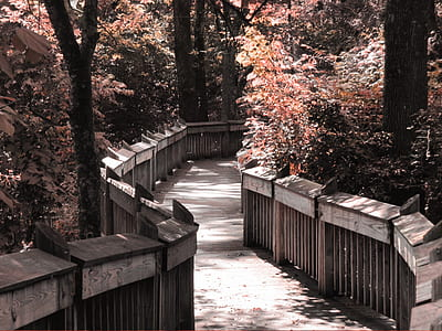 photo of gray wooden bridge between trees