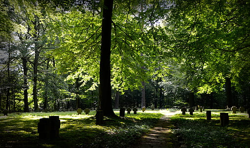 landscape photography of forest with green leafed trees