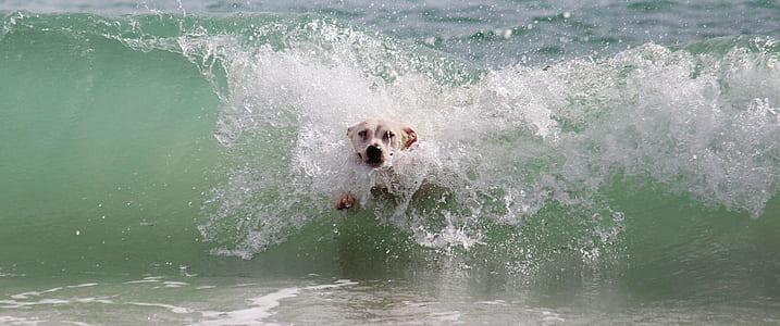 medium short-coated white dog plays on waves during daytime