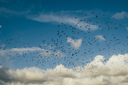 flock of birds flying under blue sky with heavy clouds