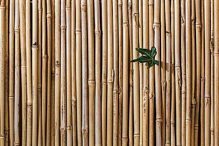 brown bamboo lot