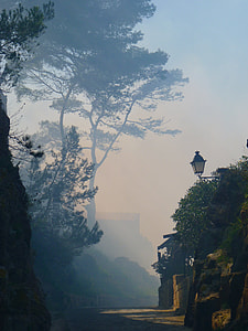 photo of green trees on fog